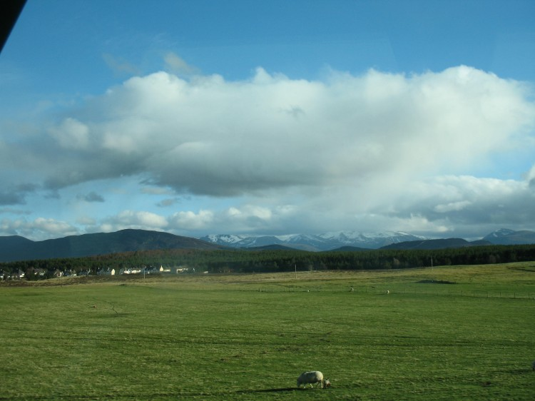 Sheep and Cairngorms